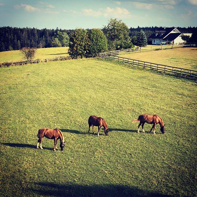 🐴🐴🐴 #horses #blackforest