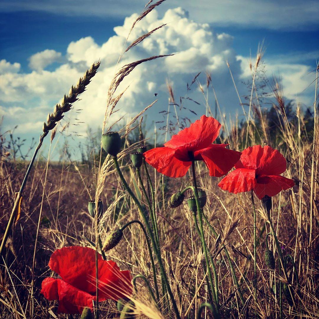 Poppy & Clouds #landscape #nature #poppy #mohn #clouds #field #sky